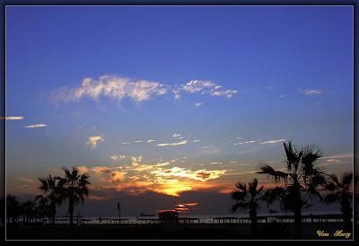 вечерние пальмы