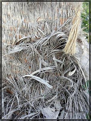 кора пальмы