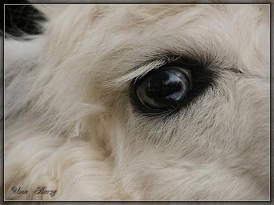 взгляд, корова, животное