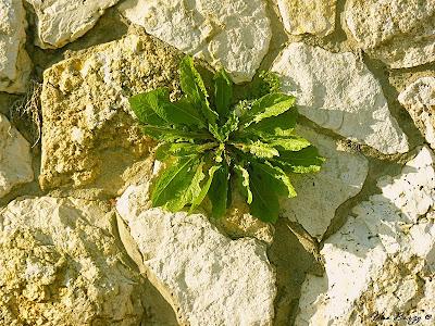 цветок в камне