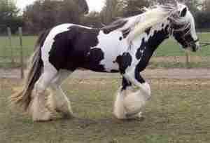 paint clydesdale - photo #3
