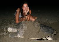 Apoyando a las tortugas