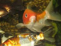 Мої рибки