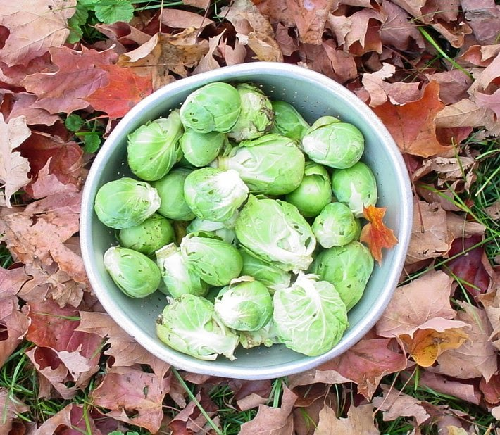 how to cook brussel sprouts in the jamie oliver