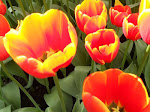 TULIPS &amp; other flowers for BLOG HEADER