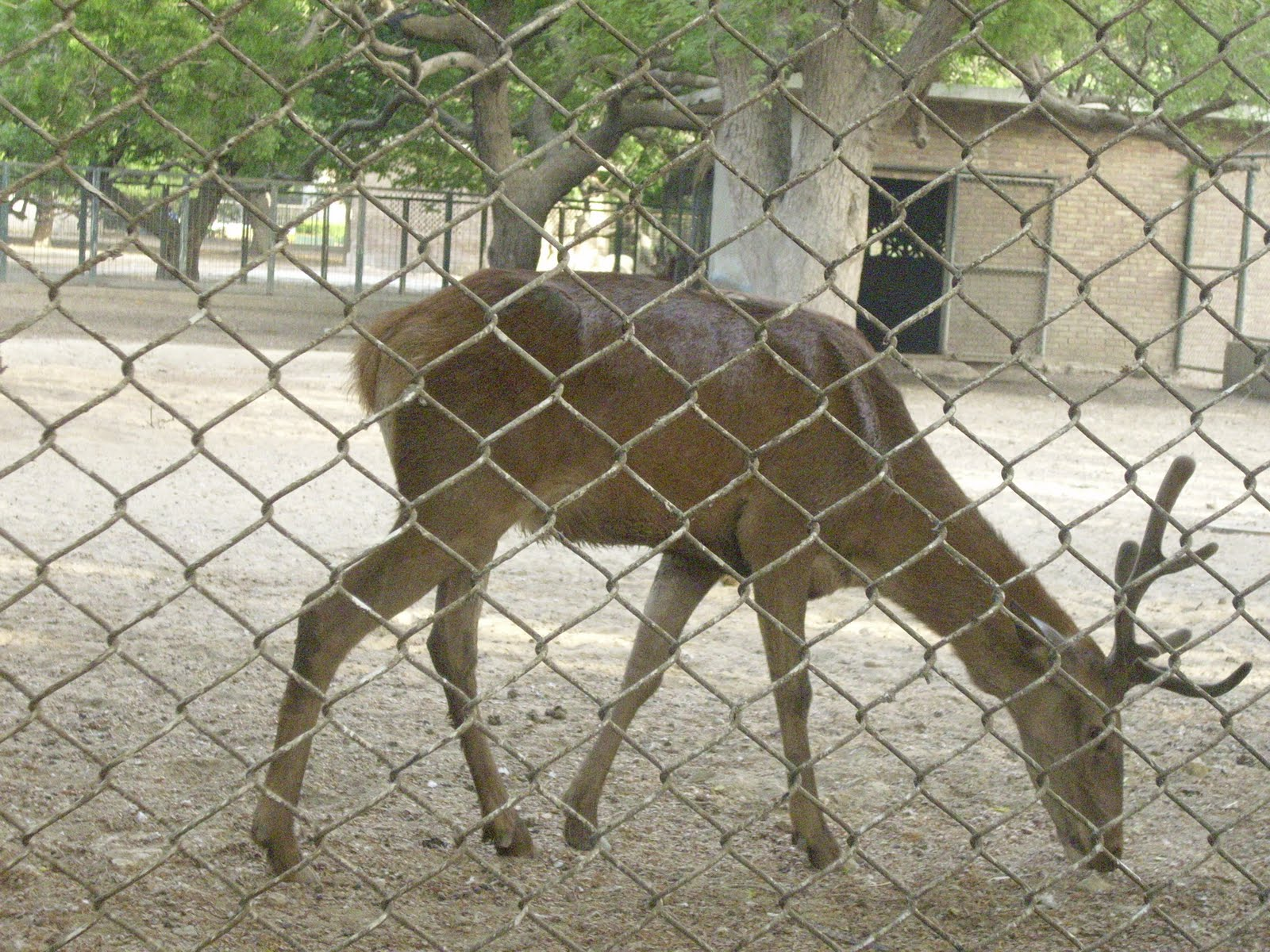 People All Over The Pakistan Come And Visit This Zoo. We Find Different  Families Of Karachi As Well As From Interior Sindh And Other Places Who  Enjoy Their ...