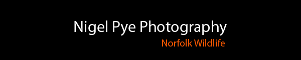 Nigel Pye Photography