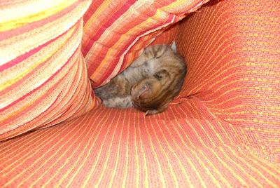 Il blog di pepe uno scoiattolo arrotolato nel divano - Pipi sul divano ...
