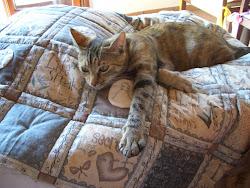 Una gatta e un quilt