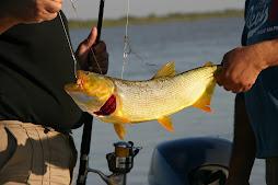 Te invitamos a disfrutar de la pesca en Cayastá