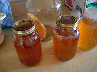 Fermented Sweet Tea- Kombucha!