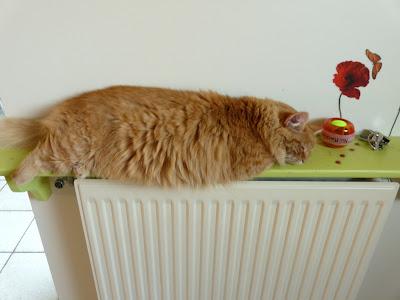 chat+radiateur+-+lili+est+insolente