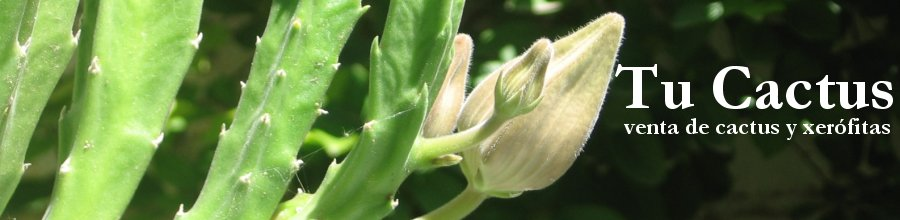 Tu Cactus - venta de cactus y xerófitas