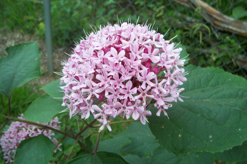 Davy\'s Louisiana Gardening Blog: Garden Bloggers\' Bloom Day - June