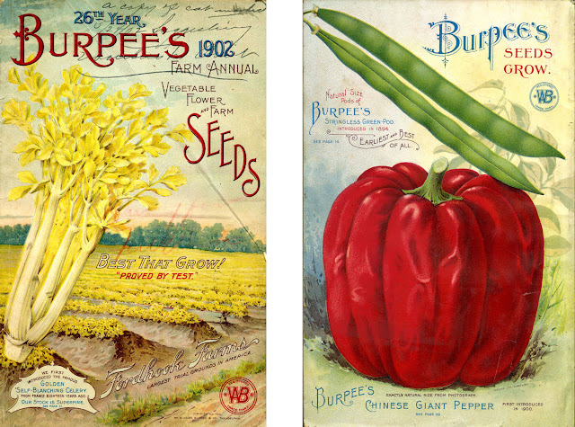 smithsonian collections blog starting  seed mail