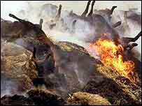 Incinération du bétail contaminé en 2003.