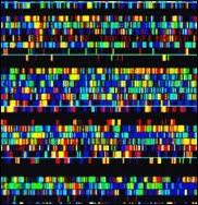 Séquençage de l'ADN.
