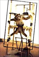 L'expérimentation animale.