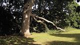 Le Poesie della nature - Albero