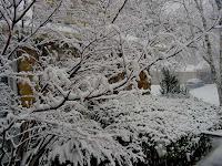 Toronto snow picture 2