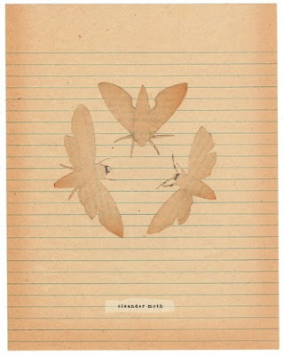 dear dodo moth illustration print