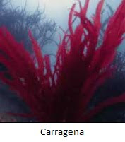 Carragena