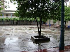 Nuestro patio en un día de lluvia