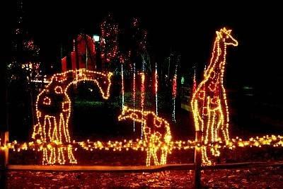 lights_giraffe_sc2