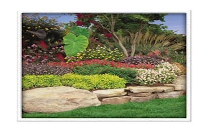 Dallas Landscape Design Services