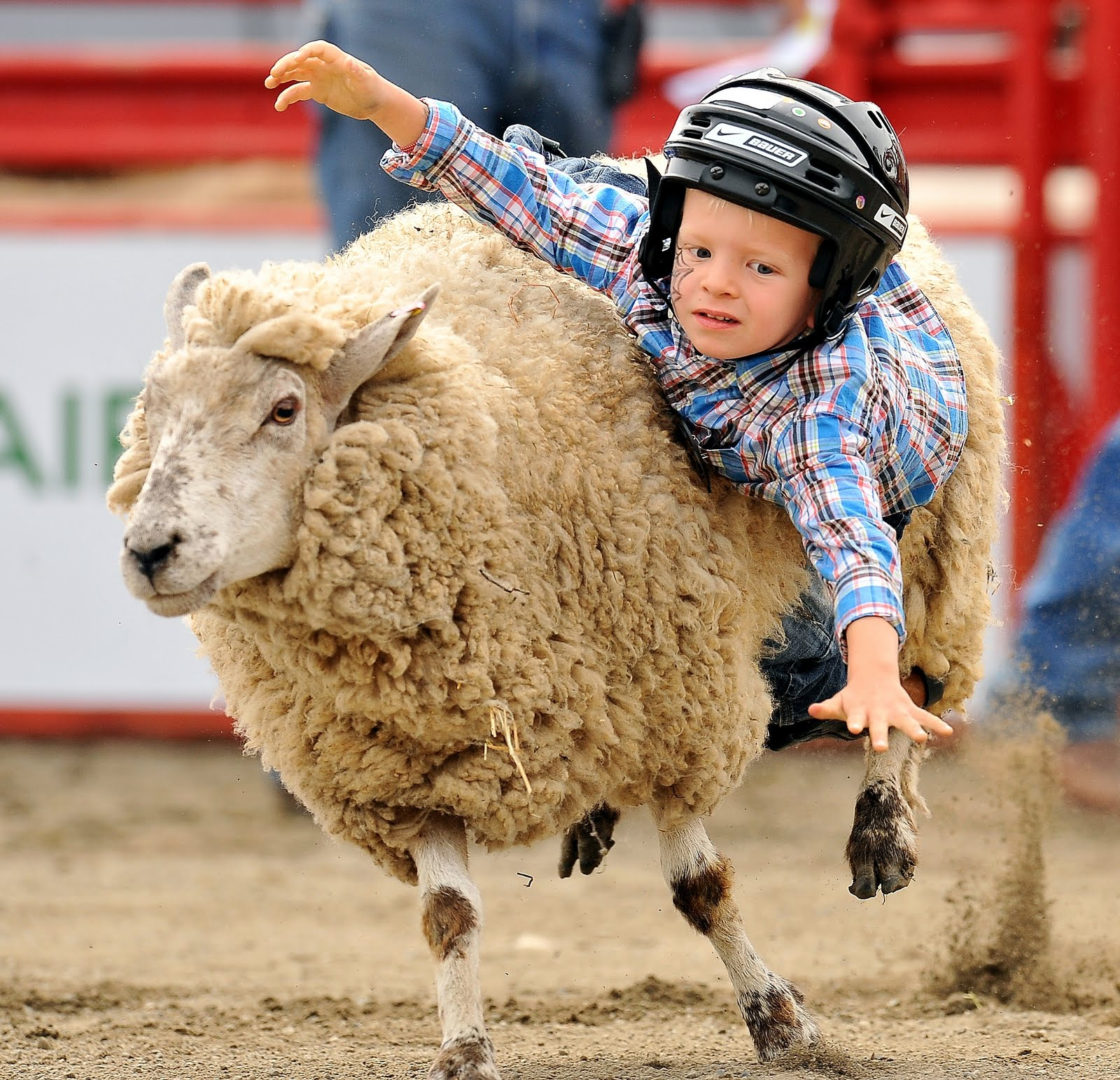 MY EXTRA TWO BITS: MUTTON BUSTIN' IN CLOVERDALE!