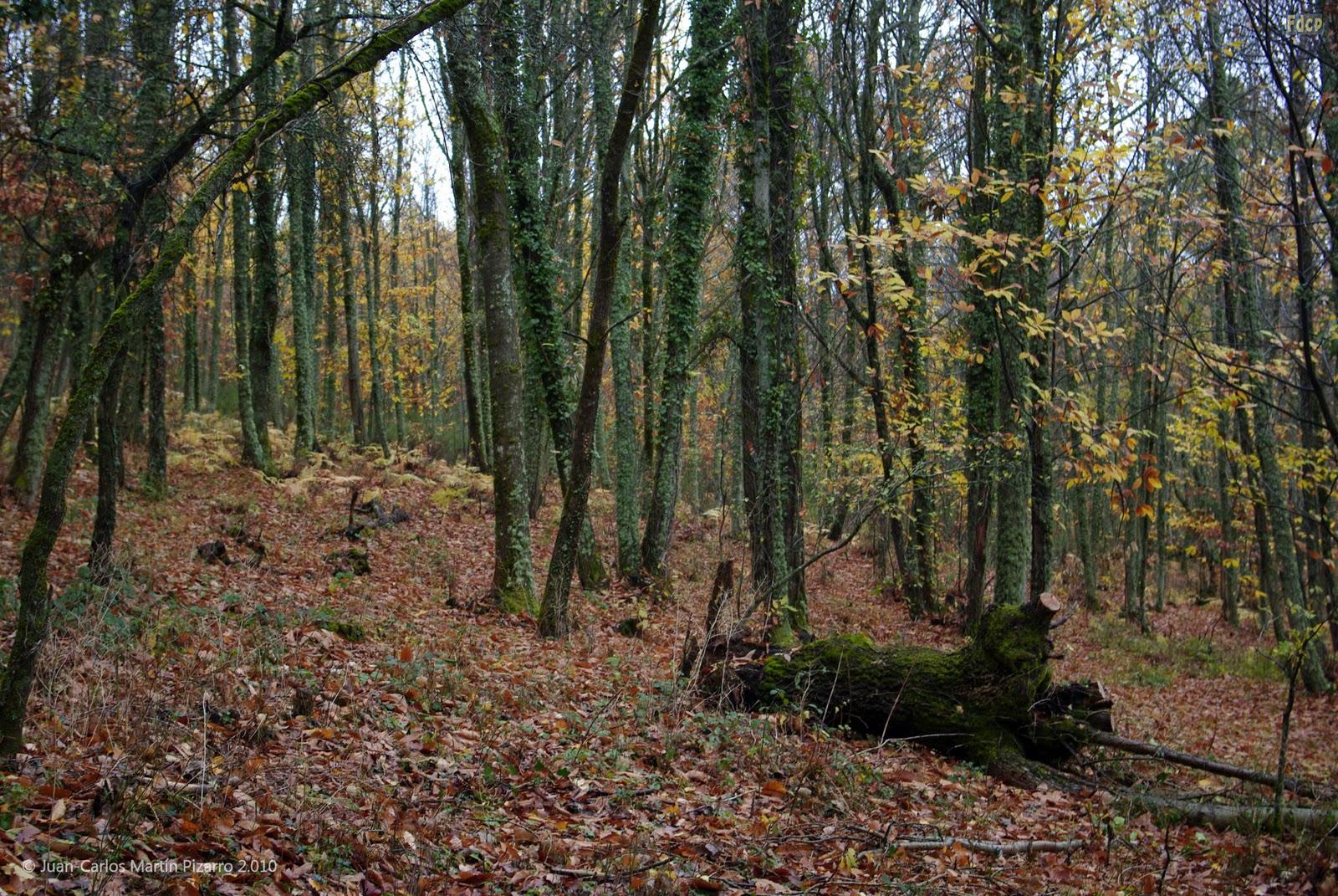 Fotos de cualquier parte el bosque iii jardines y for Carson bosque y jardin