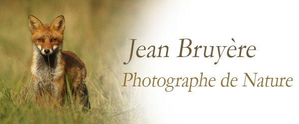 Jean Bruyère - Photographe de Nature