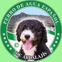 Perro de Agua Español de Abdalajis
