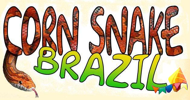 CORN SNAKE BRAZIL