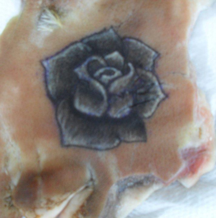 Tattoo for Tattoo practice pig skin