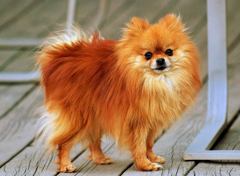 Girl Dog Names: Red/Orange Female Dog Names