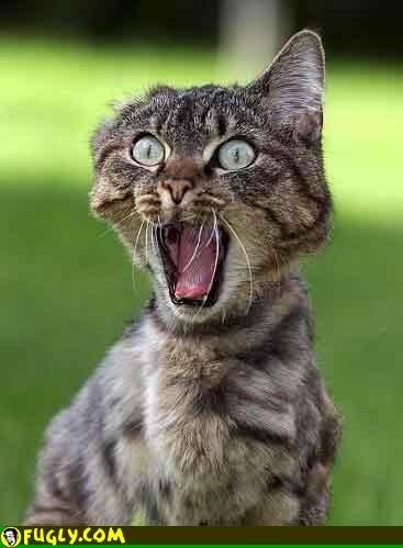 freak-out-cat.jpg