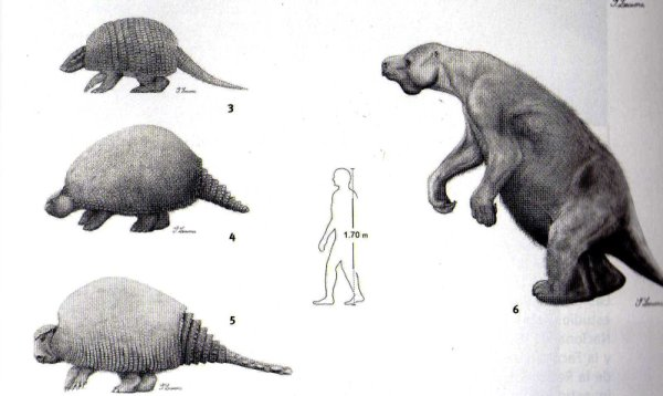 the modern armadillo and the prehistoric glyptodon