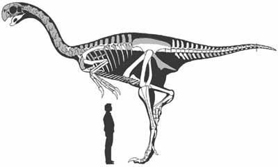 http://4.bp.blogspot.com/_GHnh3ILnSo4/TPjEEJup0tI/AAAAAAAAEAc/HmpCjQn1898/s400/gigantoraptor%2Bmedida%2Bave%2Bmas%2Bgrande.jpg