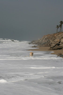 Huntington Dog Beach high tide