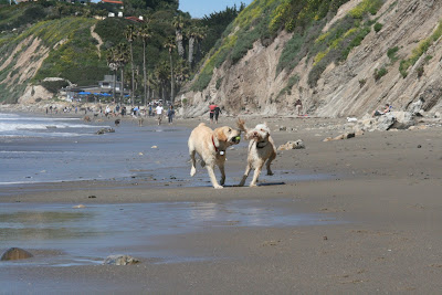 Hendry's Beach off-leash dogs