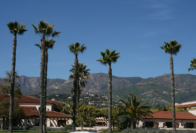 Santa Barbara palm trees
