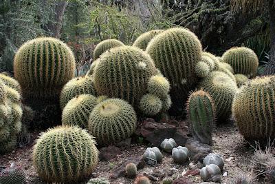 Huntington Desert Garden cactuses