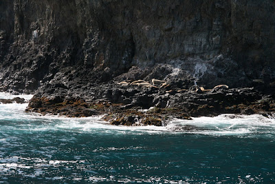 Anacapa Island rocks sea-lions