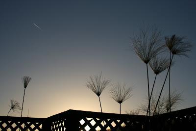 L.A. evening sky