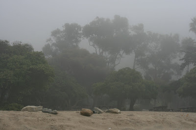 Misty Sycamore Cove