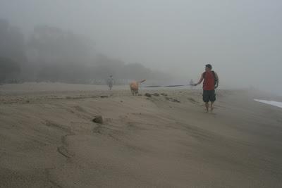 Beach puppy Cooper on his leash