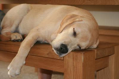 Sleeping bench pup