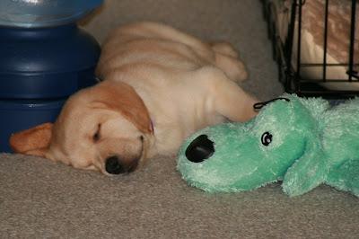 Cooper dozing