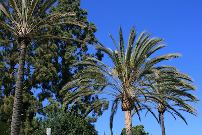 Palm trees at The Getty Villa